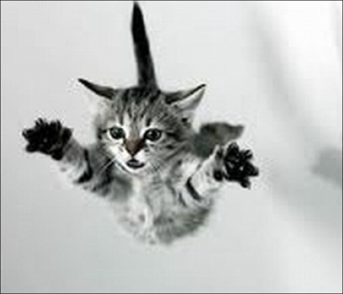 Le chat, la chute et l'atterrissage : trouvez la vraie proposition...