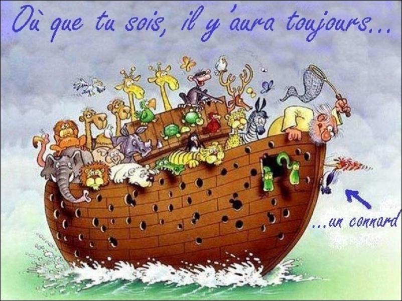 Le chat, le pic-vert et l'arche de Noë : trouvez la fausse proposition...