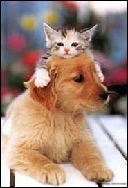 En règle générale, le chat a une _____ paisible.