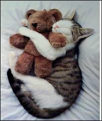 Le chat est aussi un animal très...