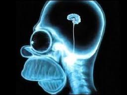 Après son opération dans l'épisode  Le cerveau , quel est le QI d'Homer ?