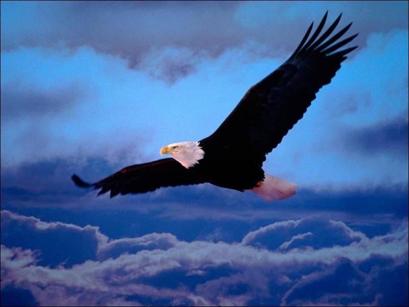 I believe, I can fly. Quel est cet oiseau ?