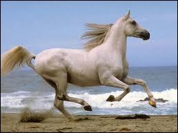 Comment s'appelle le cheval de Miley ?