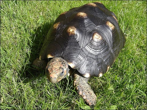 Quelle est cette tortue ?
