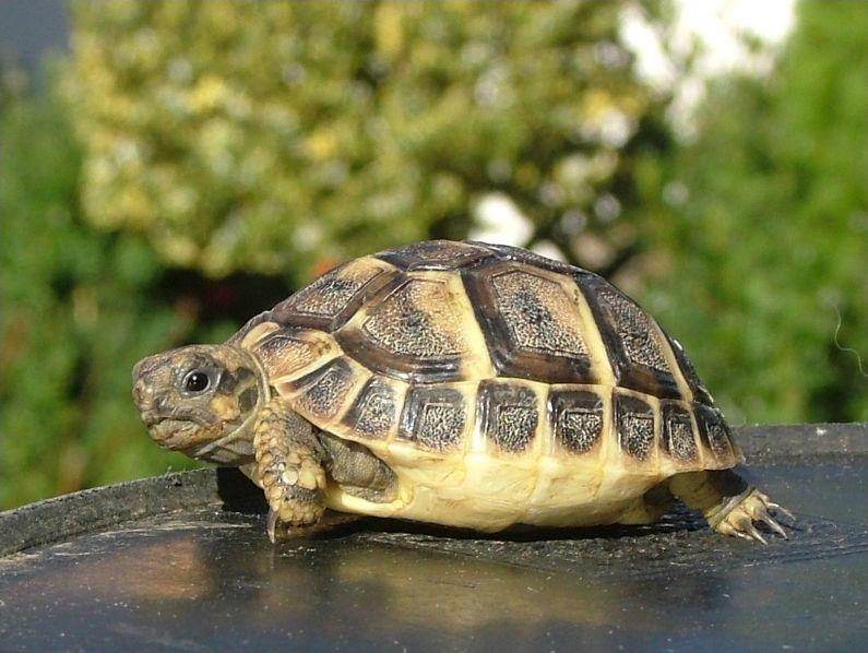 Les tortues en images