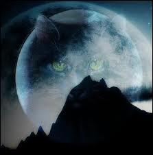Dans quels livres plusieurs chats passent-ils à la tribu de l'Eau vive ? !