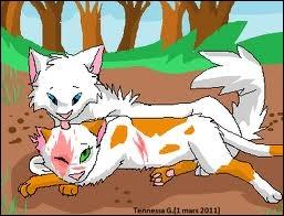 Qui sont ces deux chats sur l'image ?