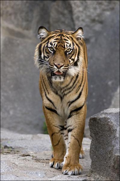 Cet animal est un ?