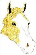 Comment s'appelle la tâche que le cheval a sur sa tête ?