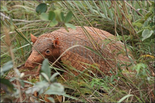Le tatou géant (priodontes maximus) est la plus grande espèce vivante de tatou avec 1, 60 m de long et ses 30 kg. De quoi se nourrit-il ?