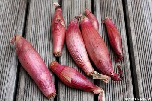 L'échalion, ou échalote  cuisse de poulet  , est une variété (... ) qui ressemble à l'échalote et souvent confondue avec cette dernière. Complétez et retrouvez le terroir.