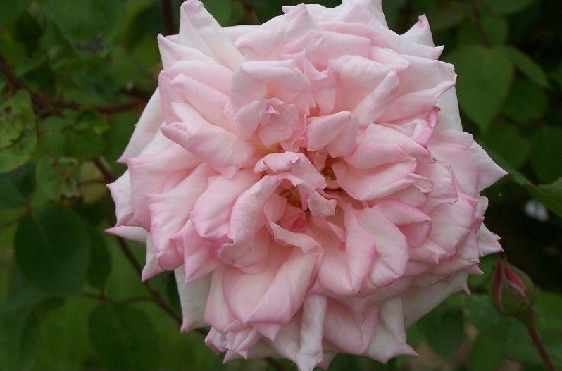 NE5 - Des noms libertins pour des fleurs, fruits, plantes
