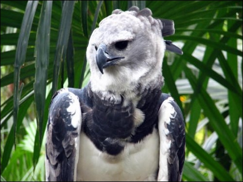 Une idée pour cet oiseau ?