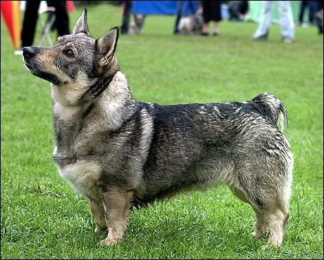 Et ce chien, lui, de quelle race est-il ?