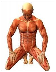 À quel niveau situez-vous le muscle masséter ?