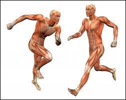 À quel niveau peut-on trouver un muscle sphincter ?
