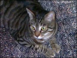 Ce chat est un chat :