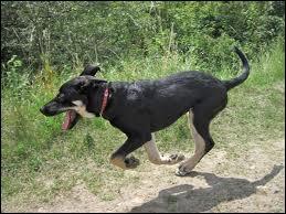 Ce chien est de race :