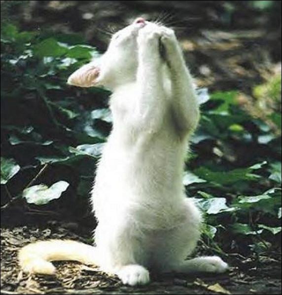 La prière du chat, trouvez la faute d'orthographe :
