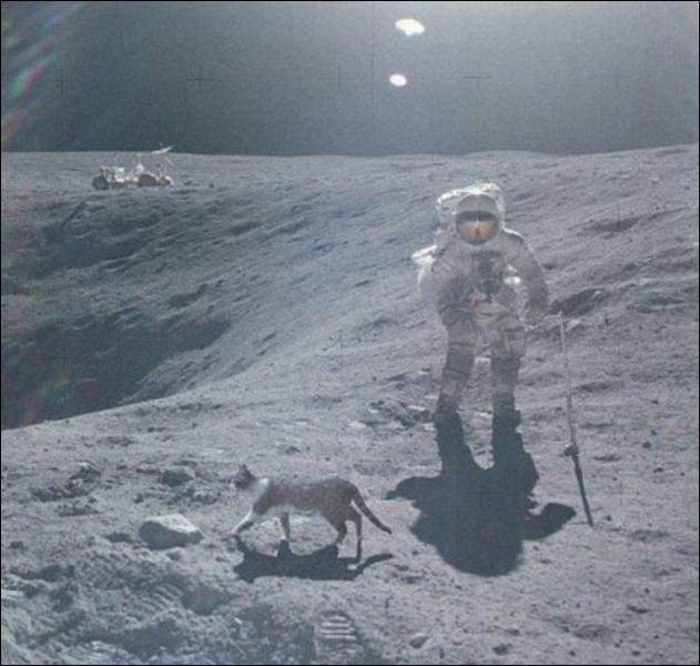 Le chat et la Lune, trouvez la fausse proposition :