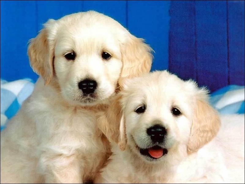 Est-ce que les chiens voient les couleurs ?