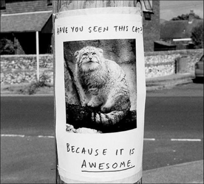Comment traduiriez-vous l'inscription figurant sur cette affiche ? Avez-vous vu ce chat...