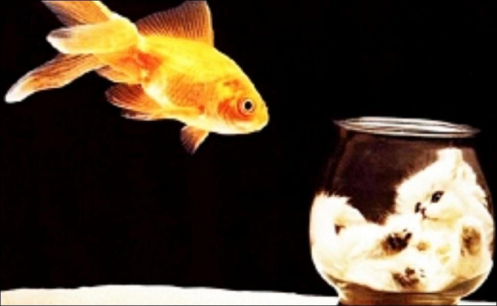 Existe-t-il un poisson physiquement équipé pour respirer hors de l'eau, de la même manière qu'un humain ?