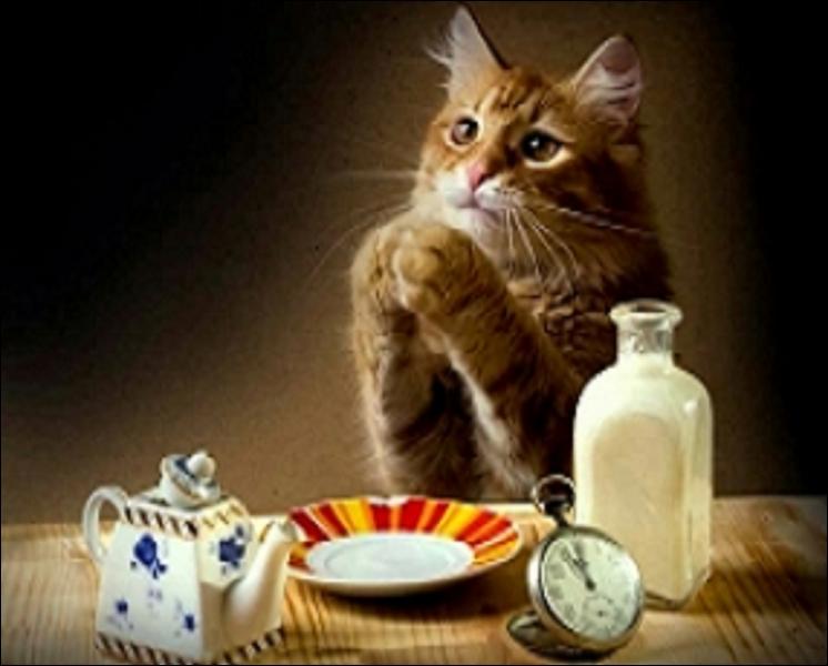 La prière du chat : trouvez la minuscule faute d'orthographe.