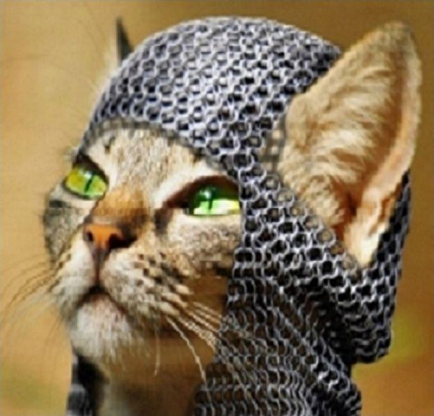 Le chat'viez vous ?