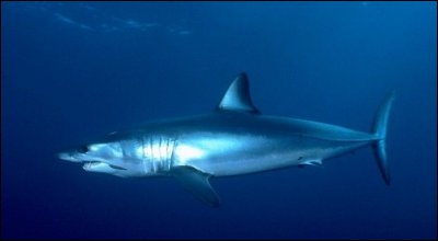 De quelle famille de requins fait-il parti ?