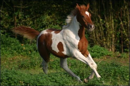 Quelle est la robe de ce beau cheval ?
