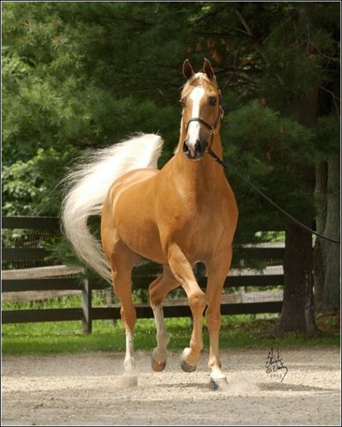 Oh, qu'il est beau ce cheval !