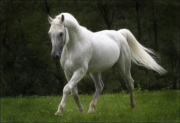 Quelle fière allure ! C'est un cheval ...