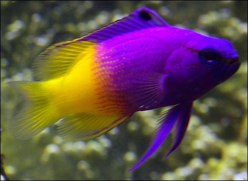 Quel est ce rare poisson aux belles couleurs ?: www.quizz.biz/quizz-381040.html