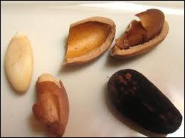 Lequel de ces pins produit les pignons de pins très riches en huile, et délicieux à déguster sur une salade ?