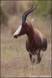 Que me dire de cet animal ?