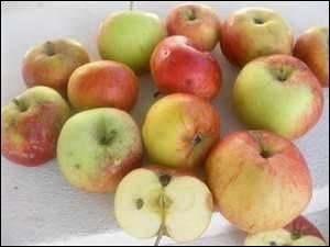 Variété de pomme qui a un goût anisé :