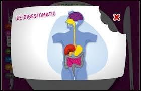 Les aliments avalés portent un nom bien spécifique selon l'organe où ils se trouvent (dans l'ordre : bouche, œsophage et estomac – duodénum - colon). A vous de désigner l'ordre correct de ces dénominations.