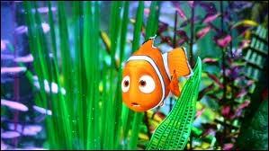 Némo est né au bord d'une barrière de corail :