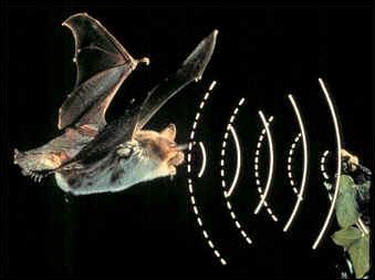 Comment appelle-t-on un son d'une fréquence élevée non perçue par l'homme ?