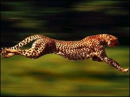 Quel est l'animal le plus rapide ?