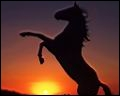 La robe du cheval  zain  a des poils blancs.