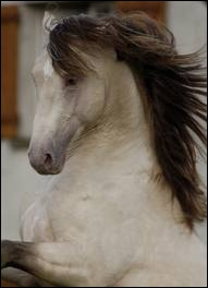 Et la robe de ce cheval ?