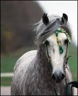 Comment les chevaux compensent-ils l'angle mort (partie masquée de la vision) qu'ils ont ? (au moins 2 réponses)