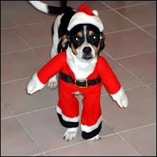 Une facile pour s'échauffer ... En quoi ce chien est-il déguisé ?
