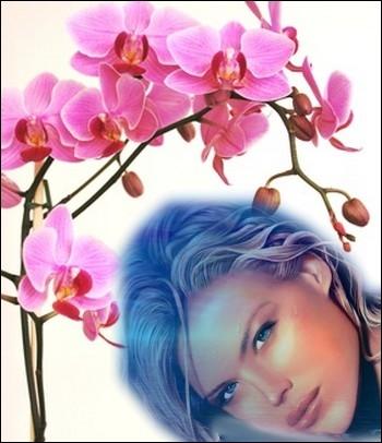 quizz autour de l'orchidée - quiz fleurs