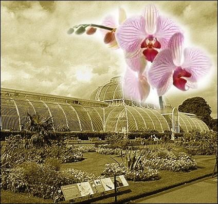 Quizz autour de l 39 orchid e quiz fleurs for Dans quel pays se trouve singapour
