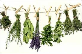En Inde, il est coutumier d'apposer sur le torse du défunt une feuille de cette plante aromatique sacrée afin de l'aider à trouver le chemin de la paix éternelle. Il s'agit d'(e). .