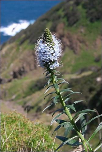 Quelle est cette fleur de montagne ?