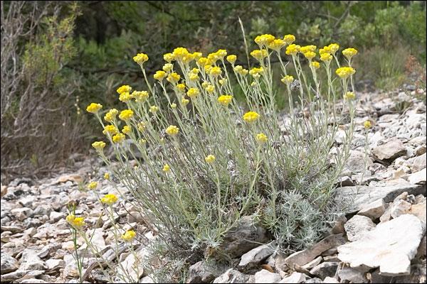 Que sont ces fleurs de montagne ?